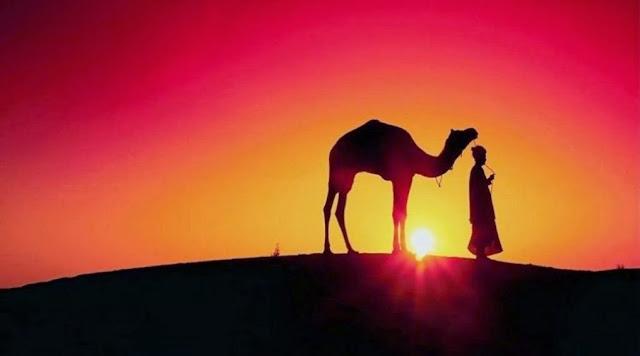 Los camellos, el desierto, y la biologia