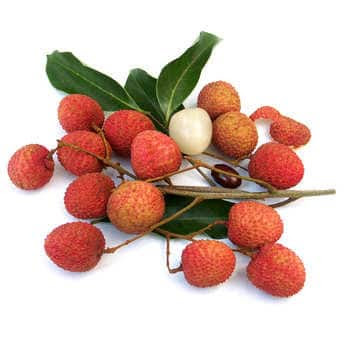 Eating lychee during pregnancy