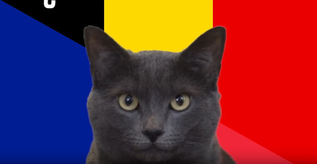 Mèo tiên tri Cass dự đoán Pháp sẽ thắng Bỉ - Win2888vn