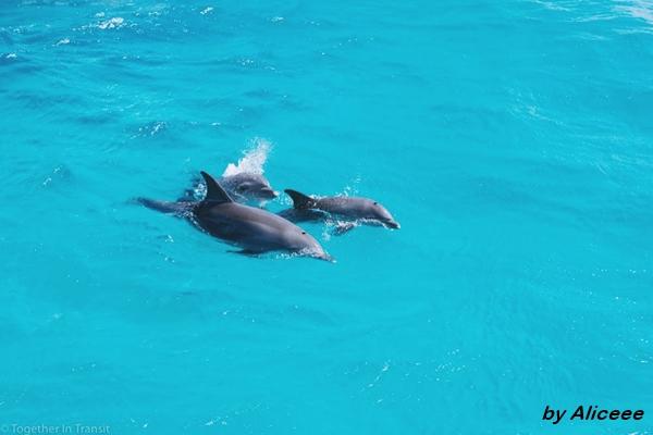 delfini-egipt-marea-rosie
