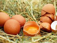 Manfaat dari Cangkang Telur Bagi Tanaman