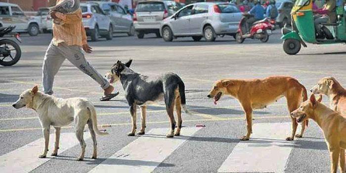 Anjing Di India