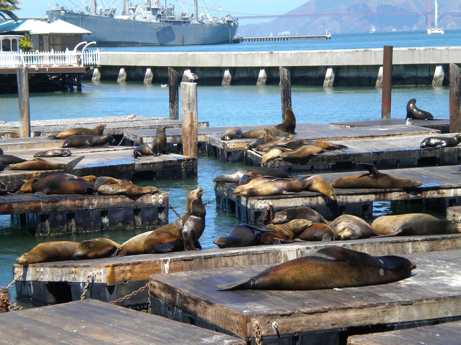 san francisco kalifornia fisherman's wharf merileijona pier laituri matkailu matkajuttu mallaspulla