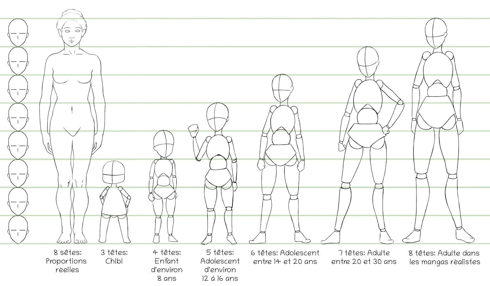 proportion du corps à différents âges