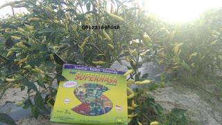 Agen Nasa Kecamatan Selopuro Blitar 081231898048