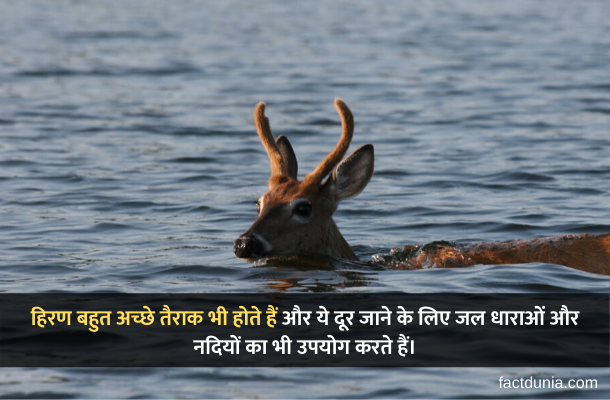 Facts about deer in Hindi