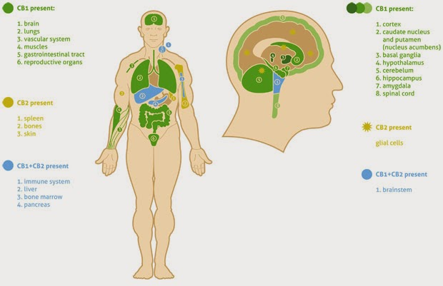 how to get thc out of your system quickly naturally