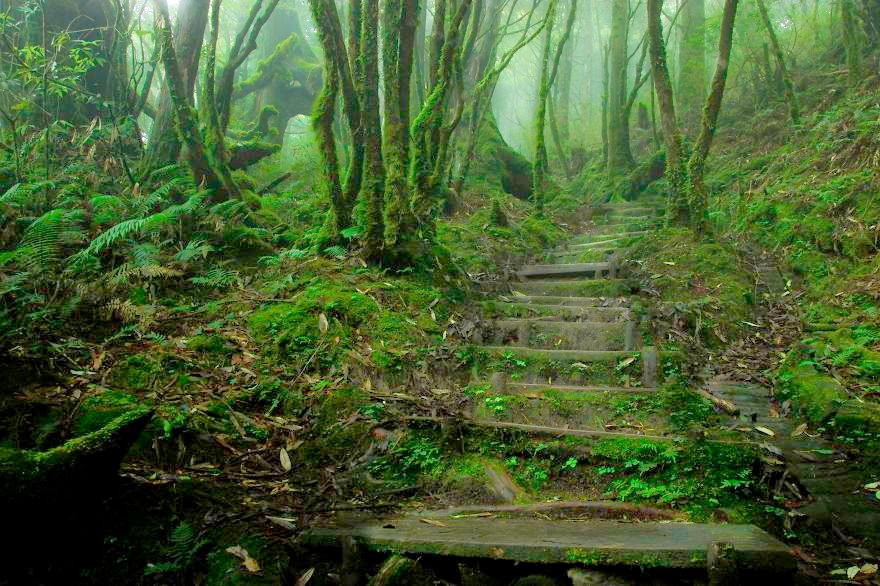 7. Chinese Hemlock Trail, Tapingshan, Taiwan - 22 Mysterious Forests I'd Love To Get Lost In