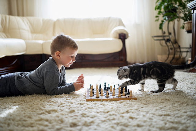 A boy plays chess with his pet cat