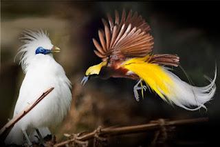 Daftar nama dan jenis burung ini akan terus bertambah dikarenakan masih banyak daerah yang belum dijelajahi sepenuhnya.