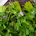 How to Store Coriander/Cilantro Leaves for 2-3 weeks / What do you do with Coriander Stems
