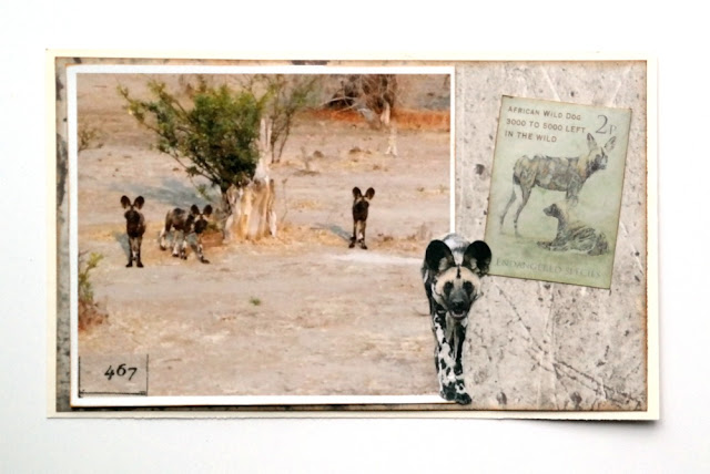 African Wild Dogs Photo Postcard by Dana Tatar for FabScraps