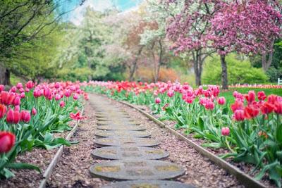 Taman bunga, perubahan hidup, kesadaran, kekuatan pikiran, ali ma'ruf