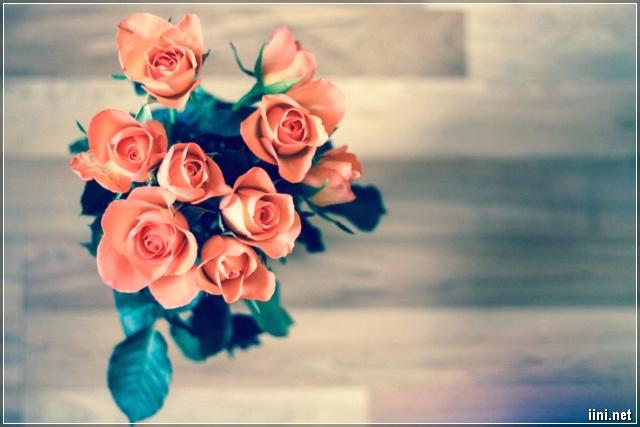 ảnh đẹp về hoa hồng
