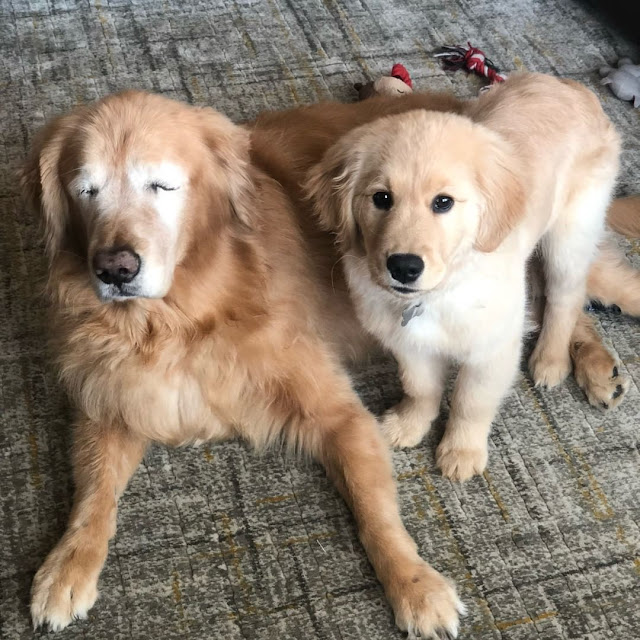 charlie and maverick