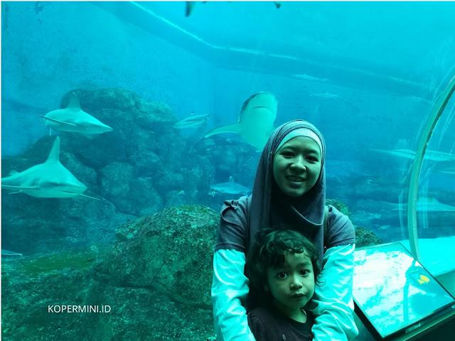 ada apa aja di sea aquarium