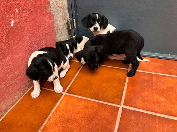 4 cachorros abandonados san josé del álamo las palmas gran canaria