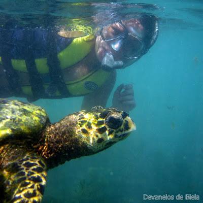 Fernando de Noronha - snorkel no Sueste com tartarugas