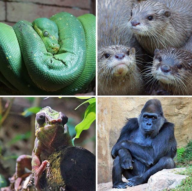 animales-criados-en-cautividad