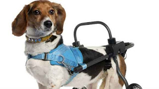 Tips For Caring For Handicapped Dogs