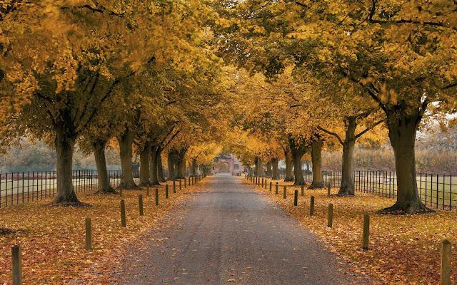 Herfst achtergrond met laan met bomen met gele bladeren