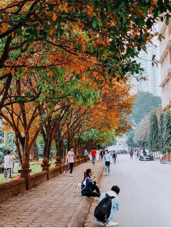 Ngôi Trường Đại Học Đẹp Nhất Mùa Đông Hà Nội: Background Sống Ảo Lung Linh Như Bối Cảnh Phim Hàn Quốc