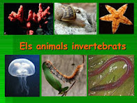 http://clic.xtec.cat/db/jclicApplet.jsp?project=http://clic.xtec.cat/projects/ainverte/jclic/ainverte.jclic.zip&lang=ca&title=Animals+invertebrats