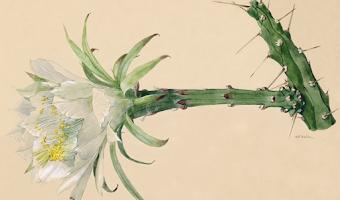 The Cactaceae: descripciones e ilustraciones de plantas de la familia de los cactus