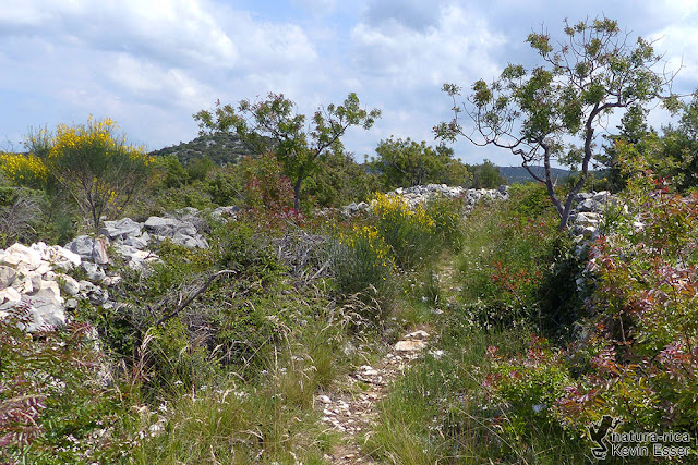 Habitat - Stone walls and shrubby vegetation