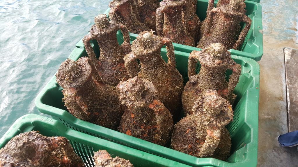Edivo-vina-amphoras.jpg