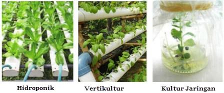 reproduksi tanaman