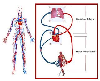 Damar Tıkanıklığı Nedir? ile ilgili aramalar bacak damar tıkanıklığı belirtileri forum  kalp damar tıkanıklığı belirtileri uzman tv  bacak damar tıkanıklığı egzersizleri  kol damar tıkanıklığı belirtileri  beyin damar tıkanıklığı belirtileri  damar tıkanıklığı hangi testle anlaşılır  kalp damar tıkanıklığı nasıl açılır  beyin damar tıkanıklığı tedavisi
