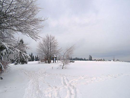 Łopień, polana Jaworze.