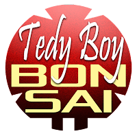 Tedy Boy Bonsai at YOUTUBE