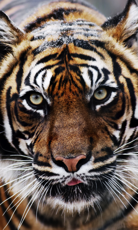 Fondos para whatsapp patada de caballo tigre fondos de for Imagenes wallpaper hd para celular