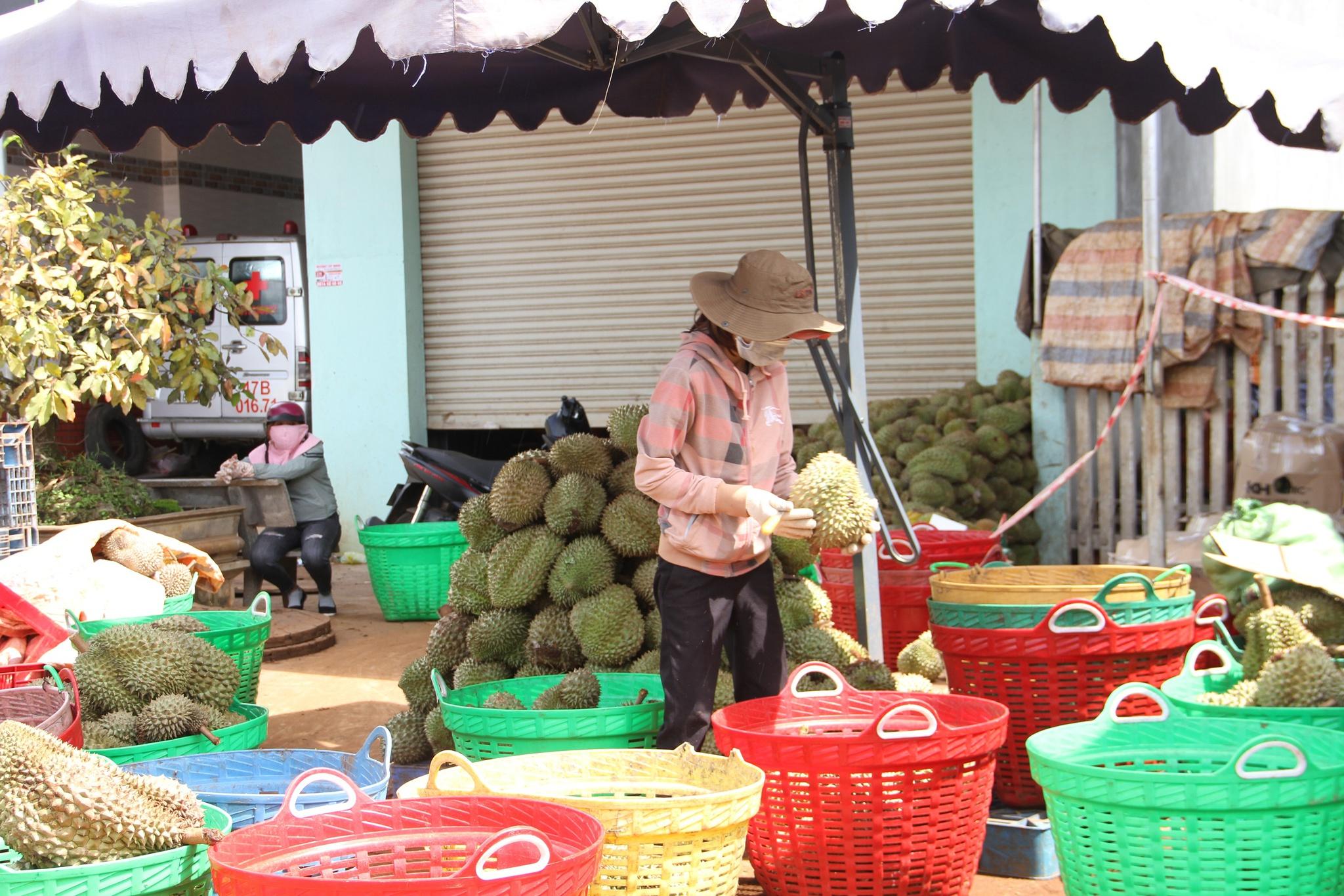 Các đại lý nhỏ tại H.Krông Pắk chỉ thu mua số lượng ít sầu riêng. Ảnh: Hoàng Bình