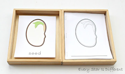 Parts of a seed learning activities and free printables/