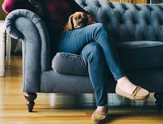 sofá para cães como subir