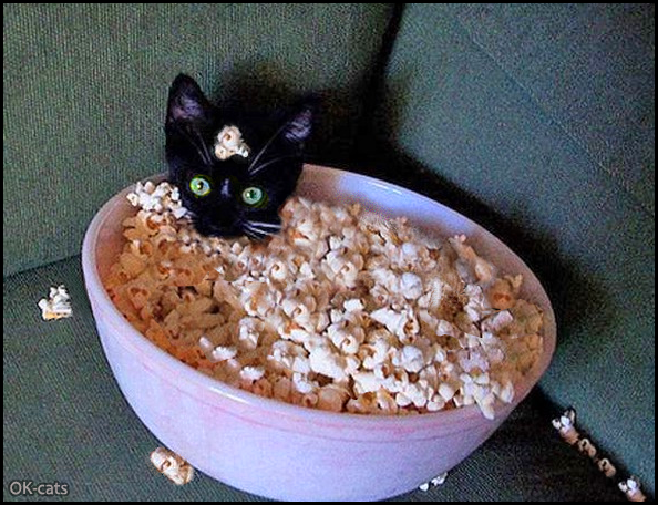 Photoshopped cat picture • Cute Popcorn kitten found a comfy bed with a warm blankie