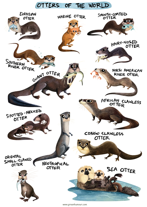 http://www.greenhumour.com/2017/04/otters-of-world.html