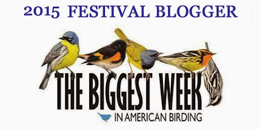 The Biggest Week in American Birding!