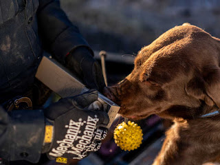 Legalisation Of Weed Forces Sniffer Dogs Into Early Retirement