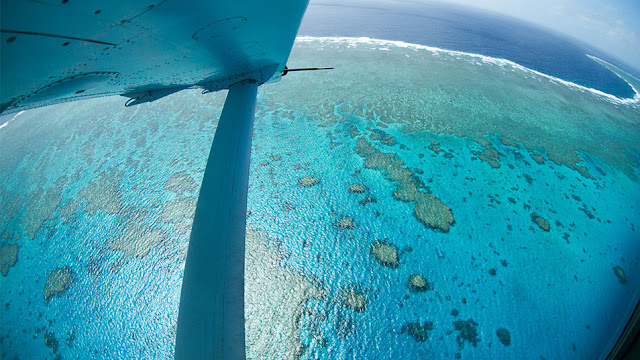 'Perfect storm' led to 2016 Great Barrier Reef bleaching