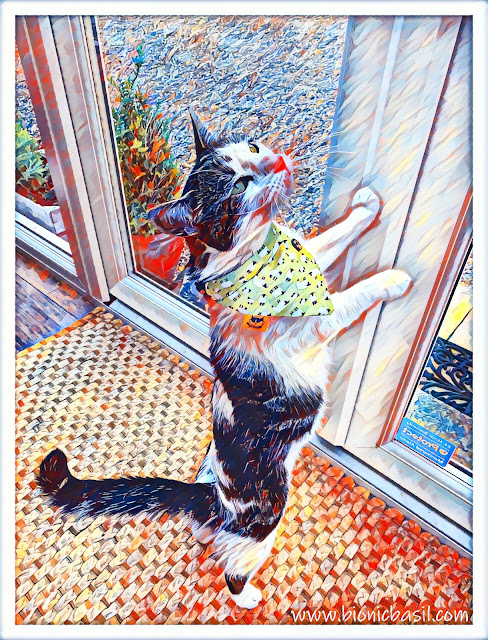 Melvyn's Counting Sheep Selfie ©BionicBasil® Caturday Art
