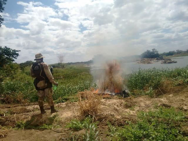 Polícia encontra 12 toneladas de maconha no norte da Bahia (Foto: Divulgação/SSP)