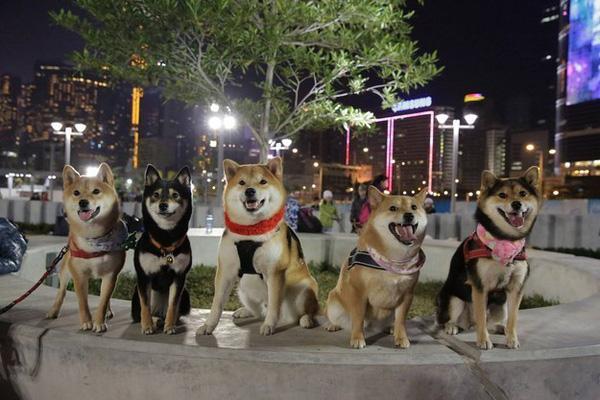 """Gặp gỡ gia đình cún Shiba Inu qua bộ ảnh dễ thương """"nhất quả đất"""""""