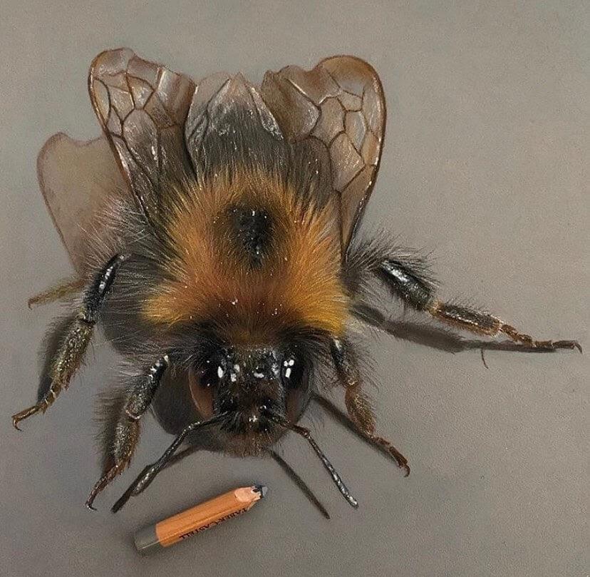 10-Bumblebee-Paul-Miller-www-designstack-co