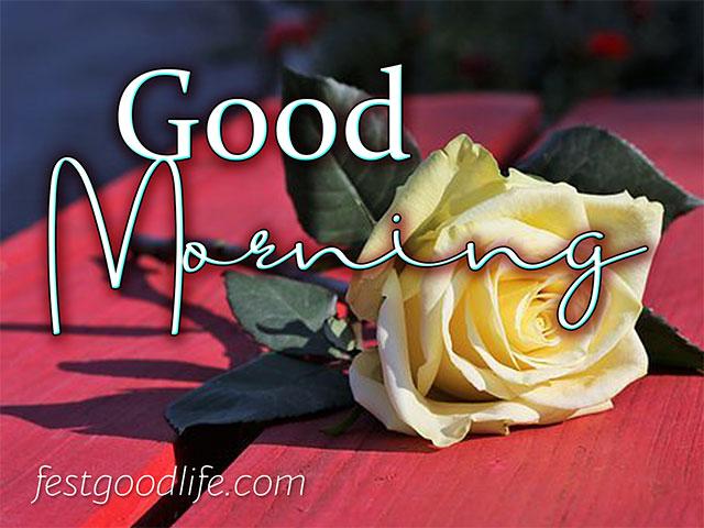 flower rose morning wish image download