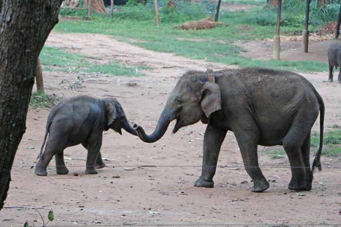 Elefanten im ETH