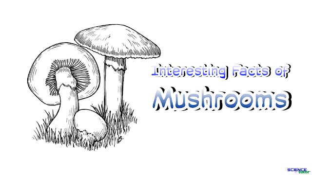 Interesting Facts About Mushrooms